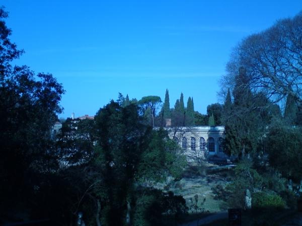 Montpellier. Jardin des plantes. 7 mars 2012