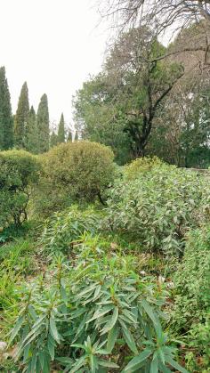 Montpellier (Occitanie, France), Jardin des plantes, 18 février 2018
